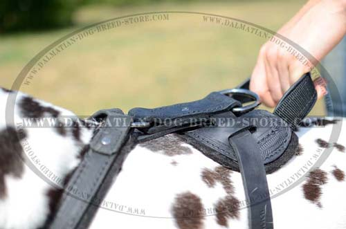 Dalmatian Harness with felt padding