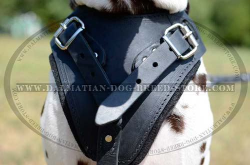 Dalmatian pure leather harness
