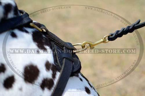 Dalmatian leather harness