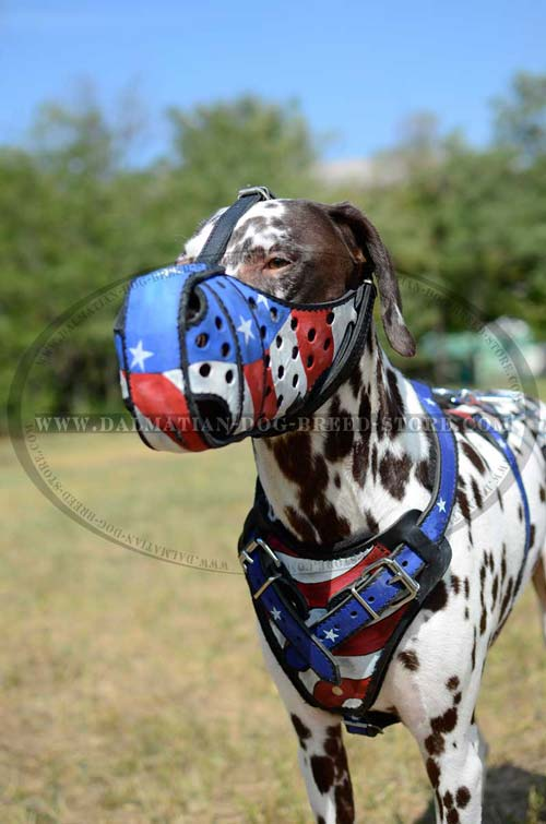 Dalmatian harness with american flag painting
