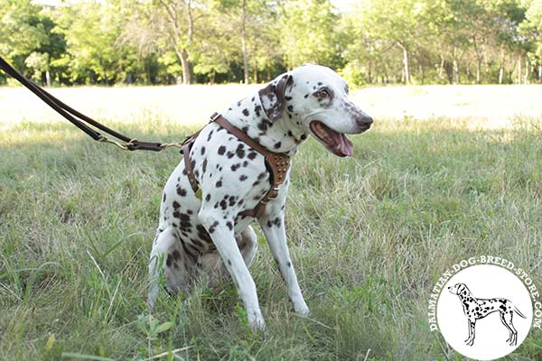 Dalmatian tan leather harness with rust-free hardware for improved control