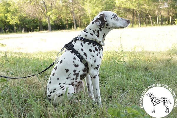 Dalmatian black leather harness with corrosion resistant nickel plated fittings for any activity