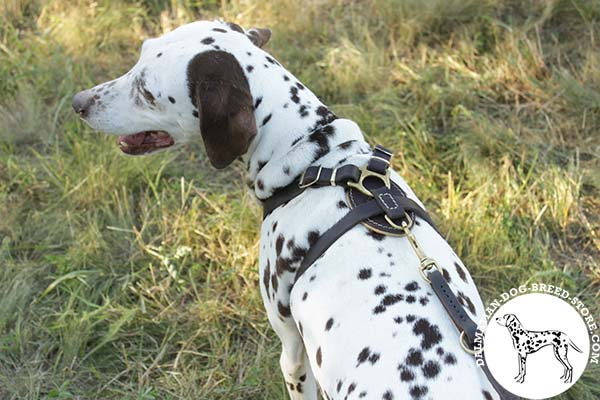 Dalmatian black leather harness Nappa padded with d-ring for leash attachment for utmost comfort