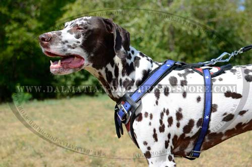 Everyday Dalmatian high-class leather harness