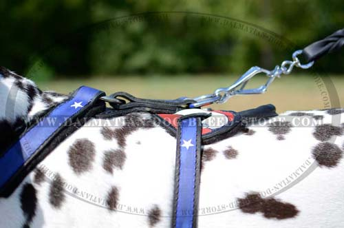 Dalmatian painted leather harness with D-ring