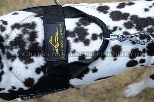 Strong nylon Dalmatian harness
