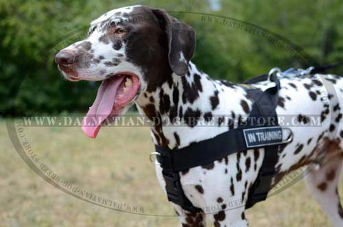 Easy in use nylon harness for Dalmatian