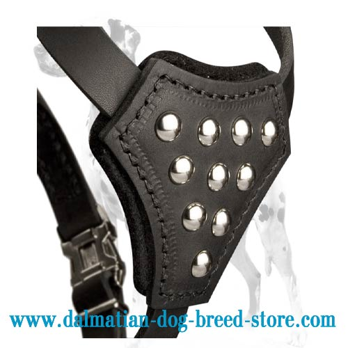 Puppy harness for Dalmatian with nice half-balls