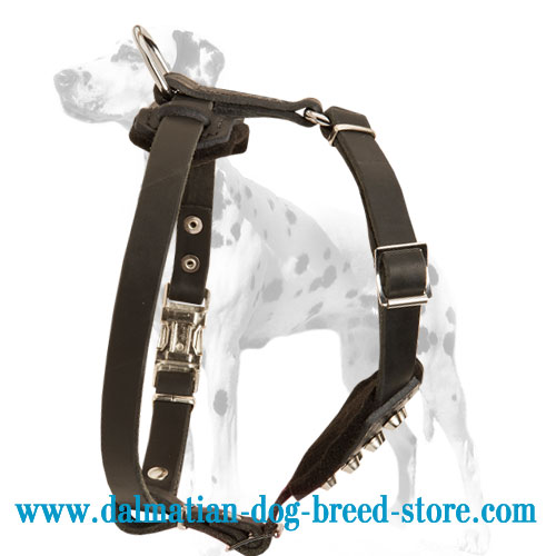 Puppy harness for Dalmatians of soft leather