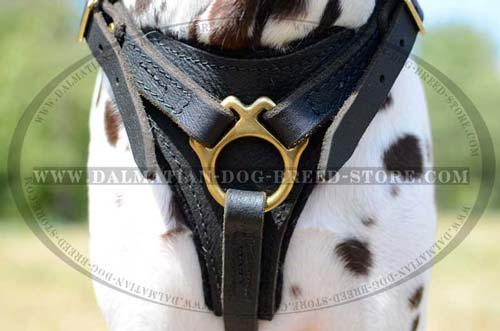 Dalmatian durable leather harness