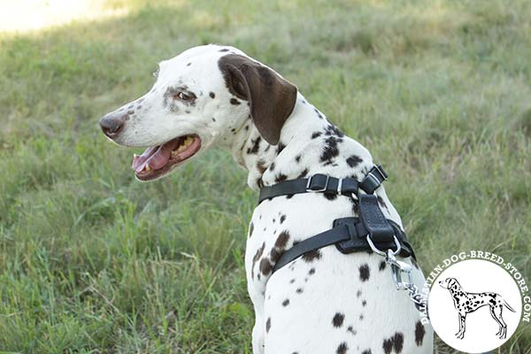 Handmade leather Dalmatian harness with D-ring for leash attachment
