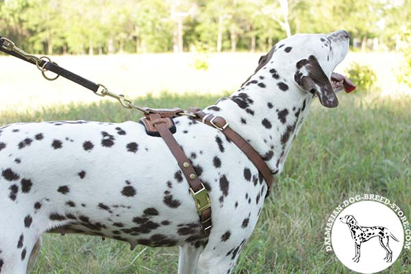 Easy-to-put-on leather Dalmatian harness with quick-release buckle
