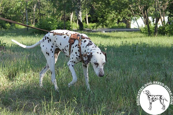 Stylish leather canine harness for Dalmatian daily walks