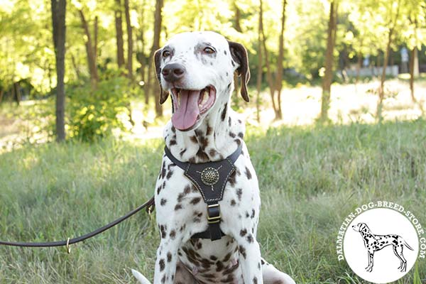 Nappa padded leather canine harness for Dalmatian daily walks