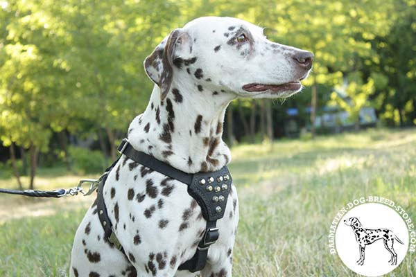 Embellished leather canine harness for Dalmatian with pyramids on chest