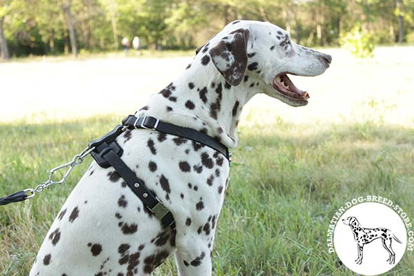 Easy-to-put-on leather canine harness for Dalmatian with quick release buckle