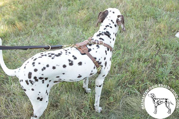 Comfy-to-use leather dog harness for Dalmatian with padded back plate