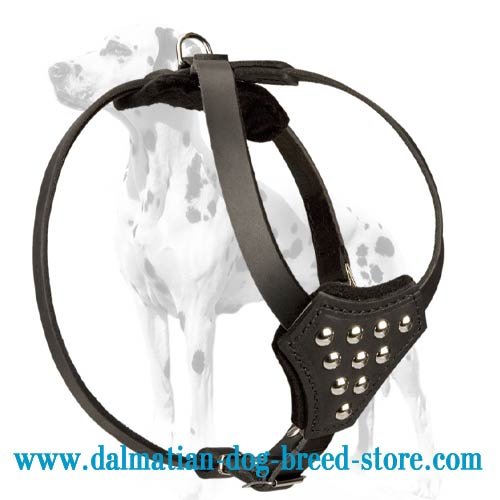Dalmatian puppy harness of soft full-grain leather