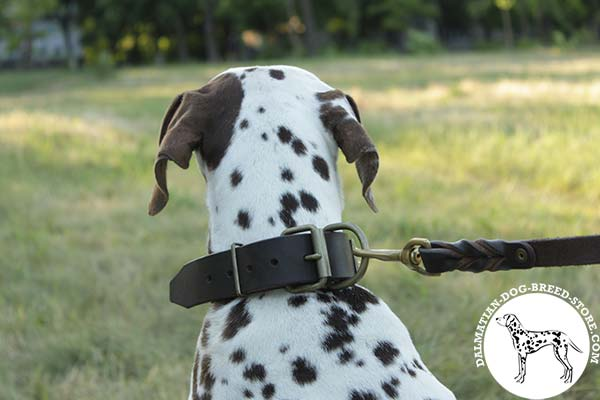 Dalmatian leather leash of braided design with brass plated hardware for walking