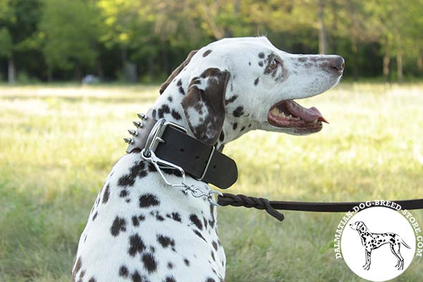 Dalmatian leather leash with strong nickel plated hardware for any activity