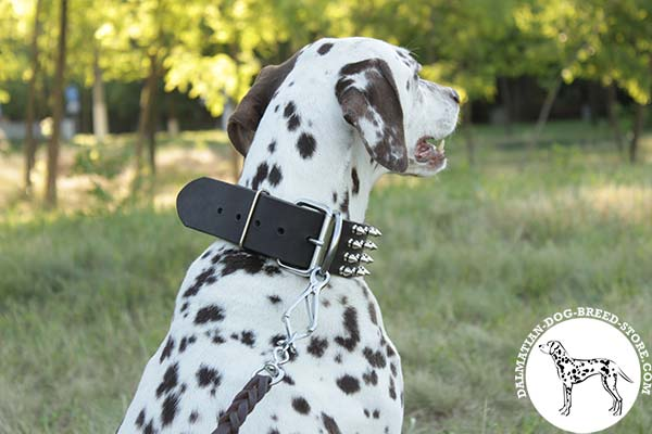 Dalmatian leather leash with strong nickel plated hardware for quality control