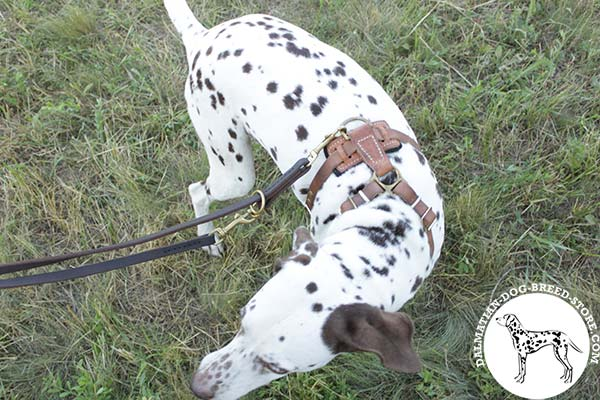 Dalmatian leather leash with rust-free hardware for any activity