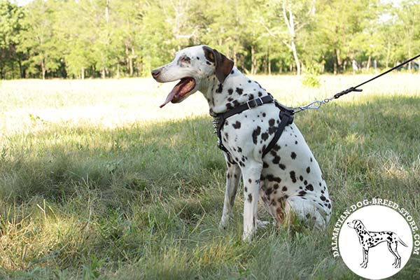 Dalmatian leather leash with rust-proof hardware for better comfort
