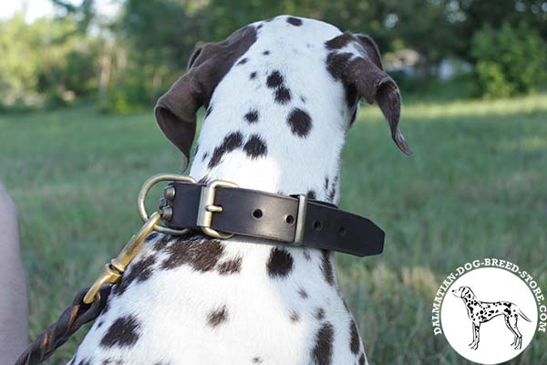Dalmatian leather leash with strong hardware for better comfort