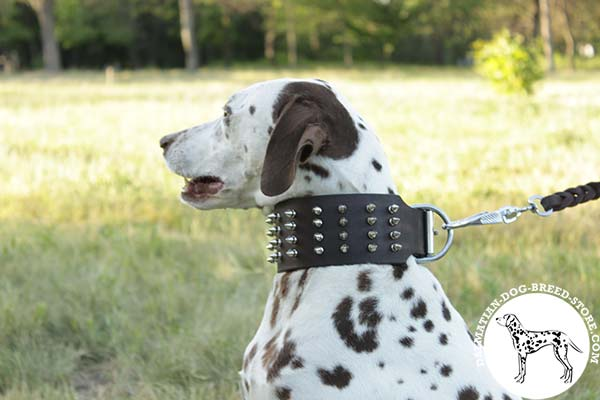 Dalmatian leather leash of high quality with riveted hardware for daily activity