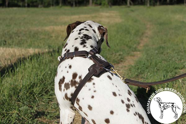 Dalmatian leather leash with non-corrosive brass plated hardware for quality control