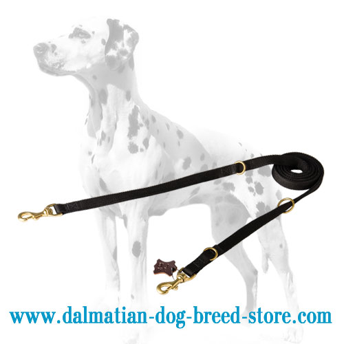 Dalmatian leather collar, extra wide