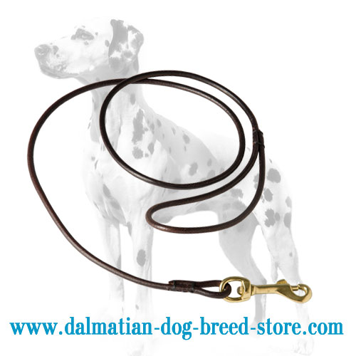 Leather dog show lead, durable and reliable