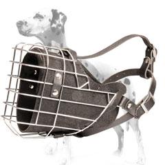 Safe training with Dalmatian muzzle