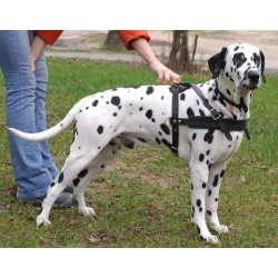 Multi-tasking Royal Leather Dog Harness for Dalmatian