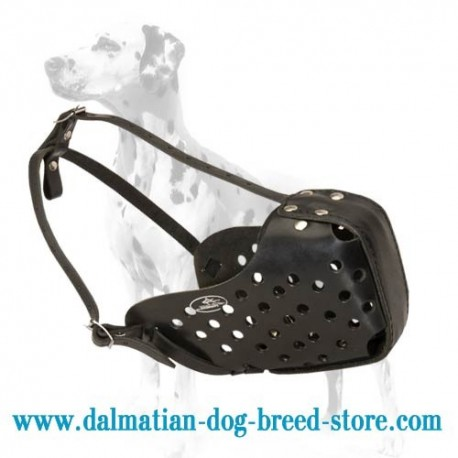Best Fit Dog Training Muzzle for Dalmatian