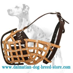 Military style leather dog muzzle for Dalmatian