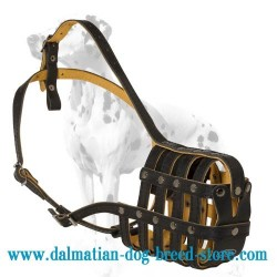 Neatly made Dalmatian royal leather dog muzzle