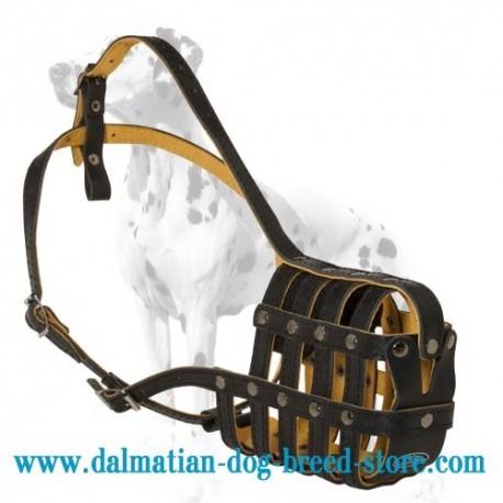 Neatly made Dalmatian royal leather dog muzzle