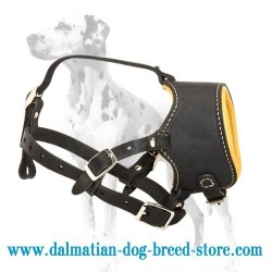 Train & walk your pet safely with our Dalmatian leather dog muzzle