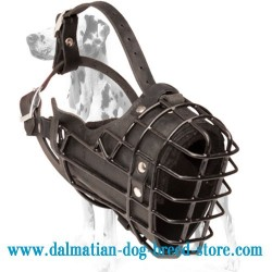 Dalmatian New Fully Padded Wire Dog Muzzle Covered with Black Rubber for Winter Walking