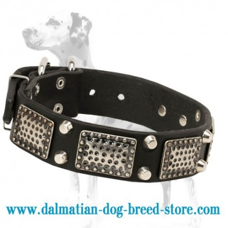 Warlike Dalmatian Dog Collar with Exclusive Adornment