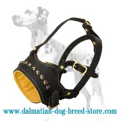 Fashionable studded leather dog muzzle for Dalmatian