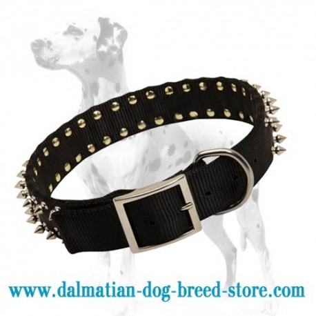 Dalmatian budget nylon dog collar with nickel spikes