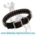 Dalmatian budget nylon dog collar with nickel spikes
