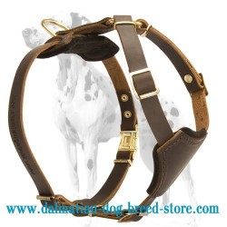 Pure Leather Dog Harness for Dalmatian puppy