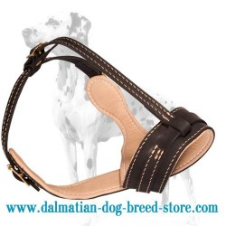 Splendid Dalmatian Dog Muzzle with Interior Padding