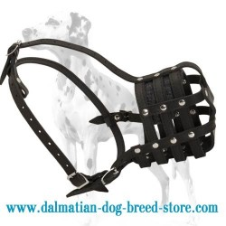 Everyday Light Weight Leather Basket Super Ventilated Dalmatian Muzzle