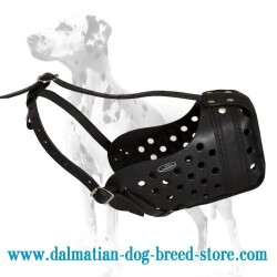 Excellent Training  Leather Muzzle for Dalmatian