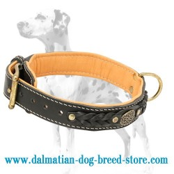 Dalmatian Nappa Padded Braided Leather Dog Collar