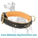 Dalmatian Nappa Padded Braided Leather Dog Collar